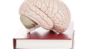 Cinco-refranes-que-la-neurociencia-puede-explicar